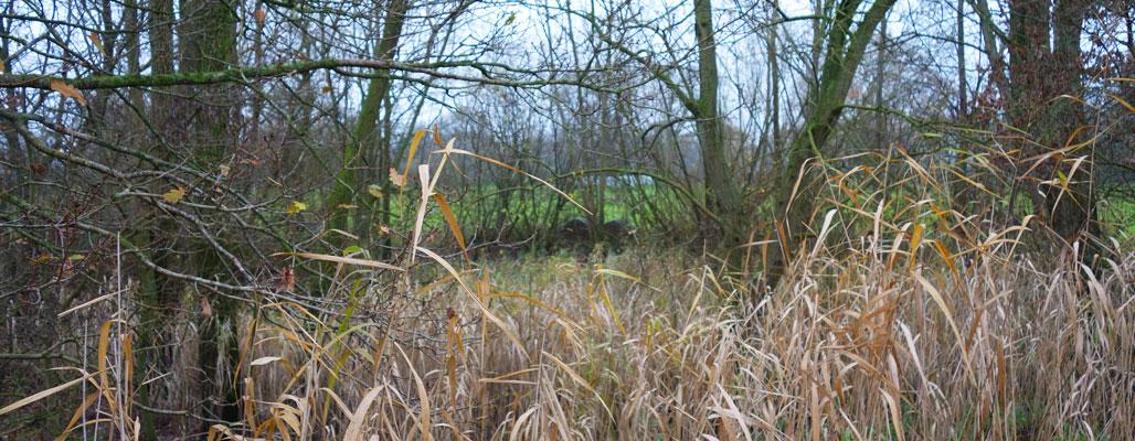 Froschteich Emlichheim Naturschutzstiftung Grafschaft Bentheim